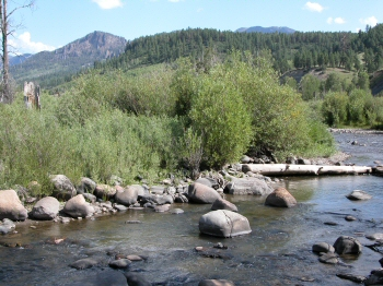 Williams Creek Colorado fishing
