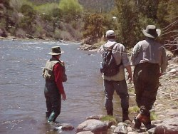 Trout Fishing Colorado