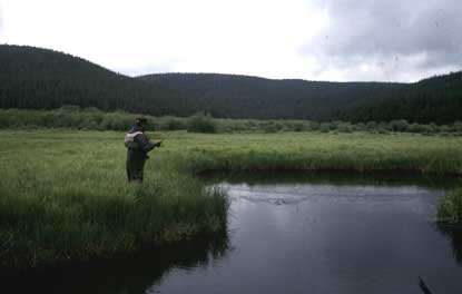 Fishing for Colorado cutthroats