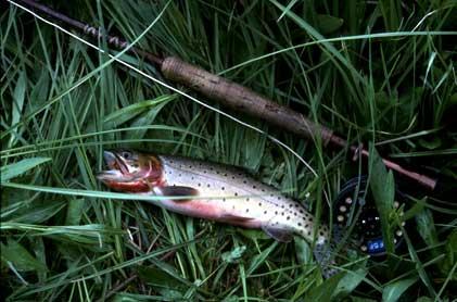 Creek Mountain Colorado Colorado Fishing Mountain Lake