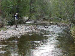 small stream fishing St. Louis Creek Colorado