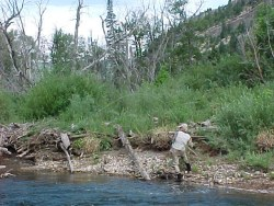 cutthroat Trout Fishing Colorado